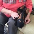 Photos: おばあちゃん、初めまして♪