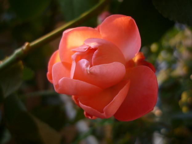 Photos: 2011.12 garden 003