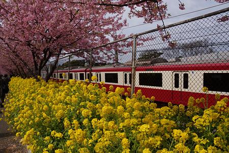 菜の花と電車!(120319)