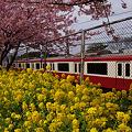 写真: 菜の花と電車!(120319)