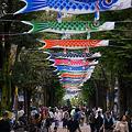 Photos: 通りの鯉のぼり!