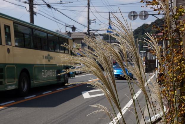 写真: 初秋のススキ20150912