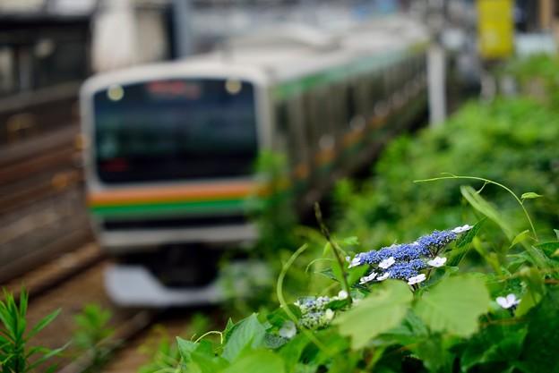 墨田の花火と列車