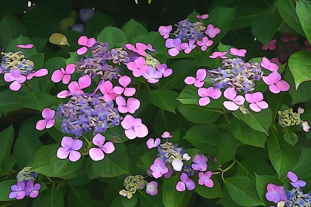 Photos: 紫陽花アート