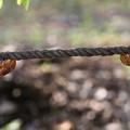 Photos: 綱渡り