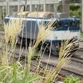Photos: 貨物駅にアキ