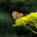 秋の羽根模様