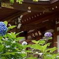 rs-150630_13_薬師堂と紫陽花・SL(妙楽寺) (3)