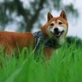 Photos: 草原のりょうま