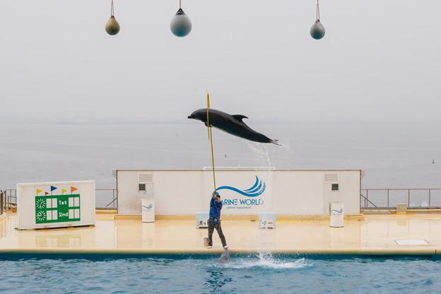 海豚@Marine World