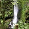 150629-53海沢園地へ滝を求めて・大滝
