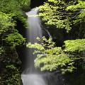 150629-60海沢園地へ滝を求めて・大滝