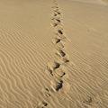 110520-35四国中国地方ロングツーリング・鳥取砂丘・私の足跡
