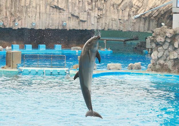 Photos: 名古屋港水族館