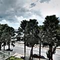 海岸通りの光景です。