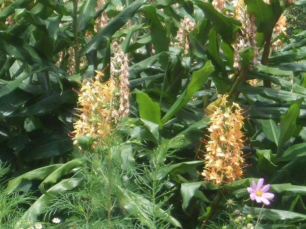 黄色い花 (ニクイロシュクシャでした)