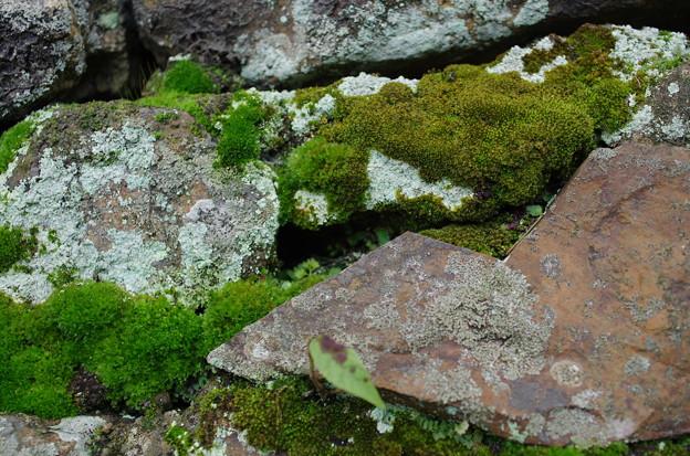 苔むす石垣(2)