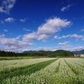 写真: 白い畑