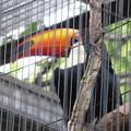 上野動物園36