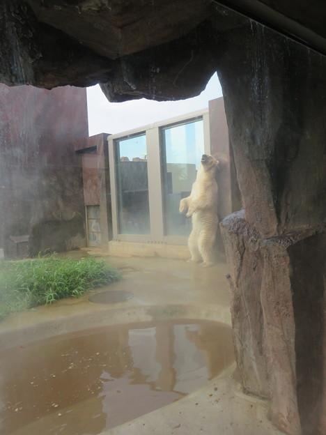 上野動物園47