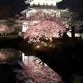 松前城の夜桜