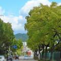 爽やかな風わたる初夏の並木通り