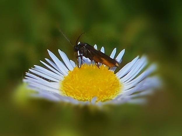 チューチューしてるような見かけない虫さん、新種かな?