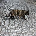 写真: 外猫