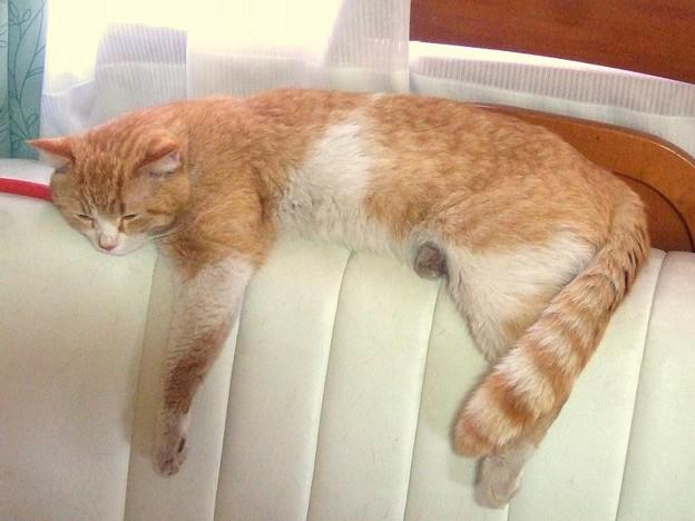 こぞ 昼寝中 捨て猫こぞもここまで大きくなりました