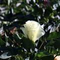 Photos: 5-XXの花