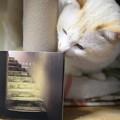 トリニテの2ndアルバム『月の歴史 Moons』が届きました