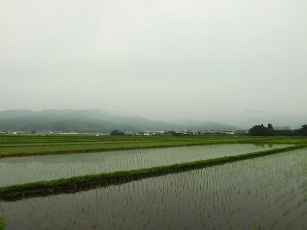 梅雨の水田