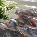 写真: 秋刀魚のお刺し身