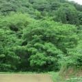Photos: 平倉城(小谷城。小谷村)