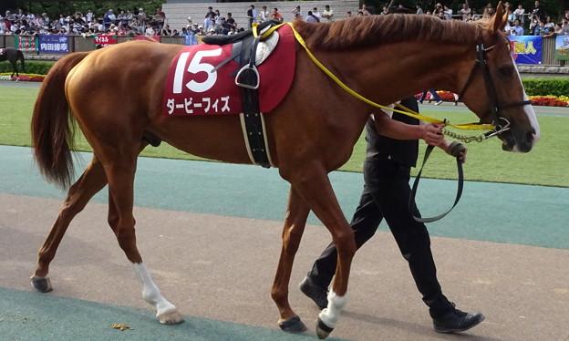 ダービーフィズ(2回東京12日 12R 第129回 農林水産省賞典 目黒記念(GII)出走馬)