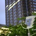 Photos: ~Yokohama Apollon~