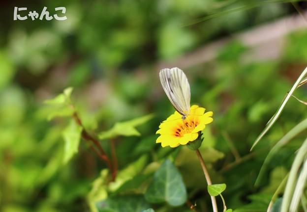 Photos: ~ティータイム~