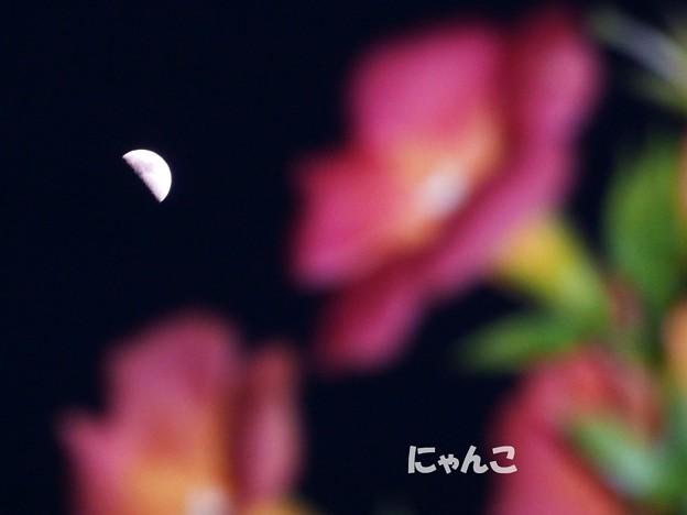 写真: ~月夜の~