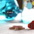 写真: ~海のお友達~