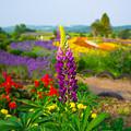 Photos: きれいな花