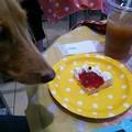 桜、ケーキを食す