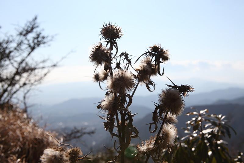 IMG_5532塔ノ岳・丹沢山登山