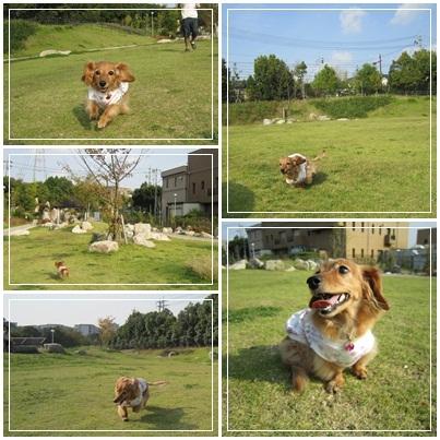 20111010 お散歩1