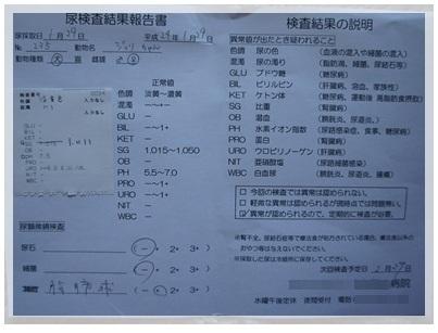 20120129 尿検査 結果