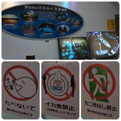 20120317 ほたるいかミュージアム