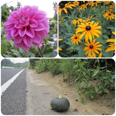20110813 お花と南瓜