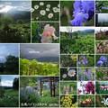 Photos: 白馬 ハイランドホテル ガーデンの花と朝の虹