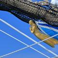 Photos: 海王丸II世  船首像の紺青