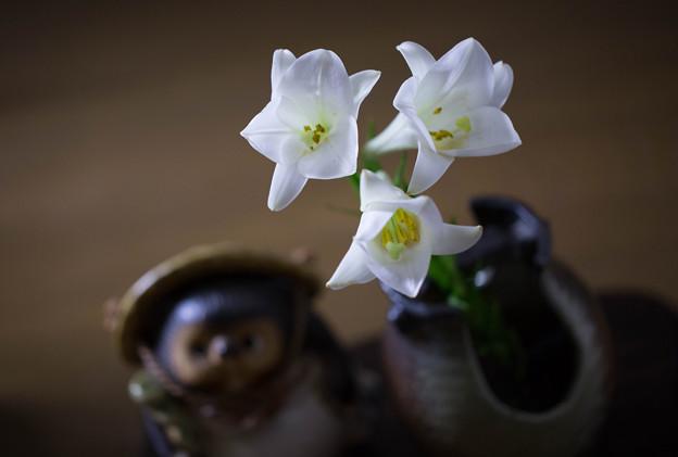 テッポウユリ 花瓶に(2)