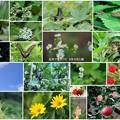 Photos: 近所で見かけた花と蝶